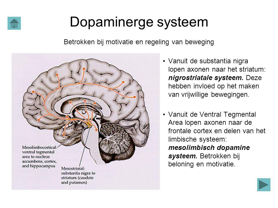 Dopaminerge systeem Vanuit de substantia nigra lopen axonen naar het striatum: nigrostriatale systeem. Deze hebben invloed op het maken van vrijwillig