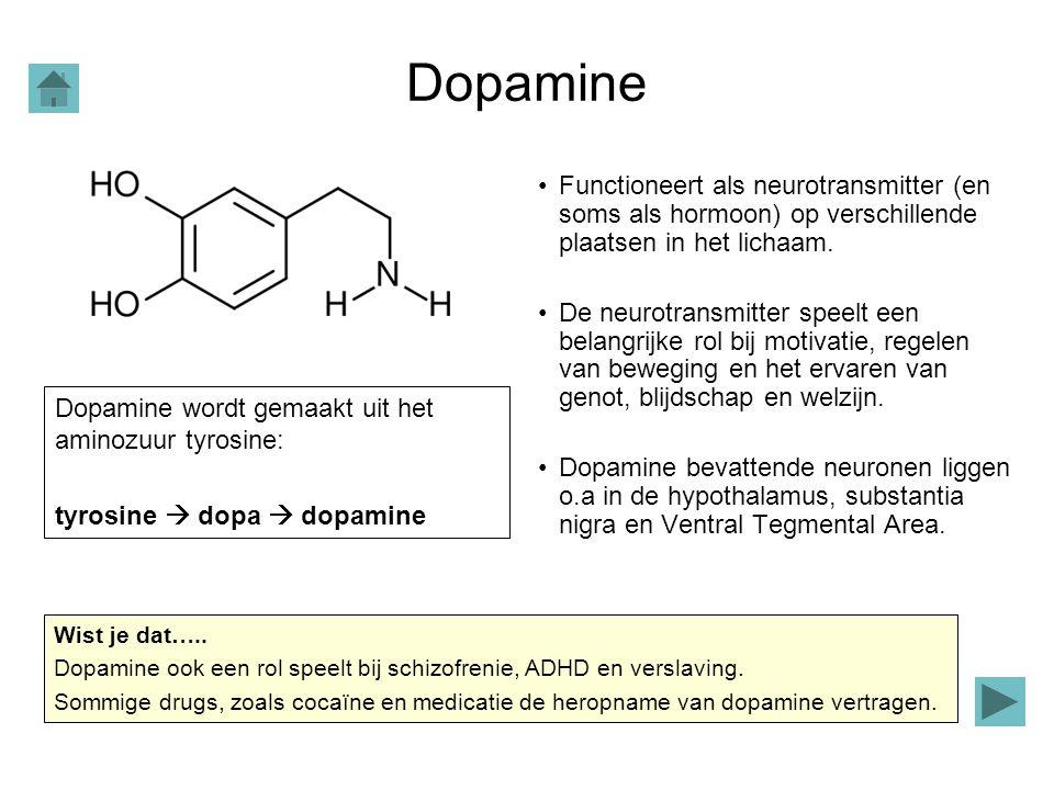 Dopamine Functioneert als neurotransmitter (en soms als hormoon) op verschillende plaatsen in het lichaam. De neurotransmitter speelt een belangrijke