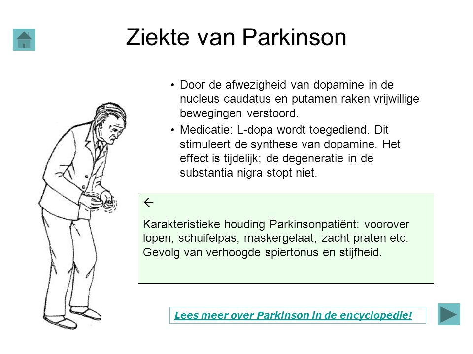 Ziekte van Parkinson Door de afwezigheid van dopamine in de nucleus caudatus en putamen raken vrijwillige bewegingen verstoord. Medicatie: L-dopa word