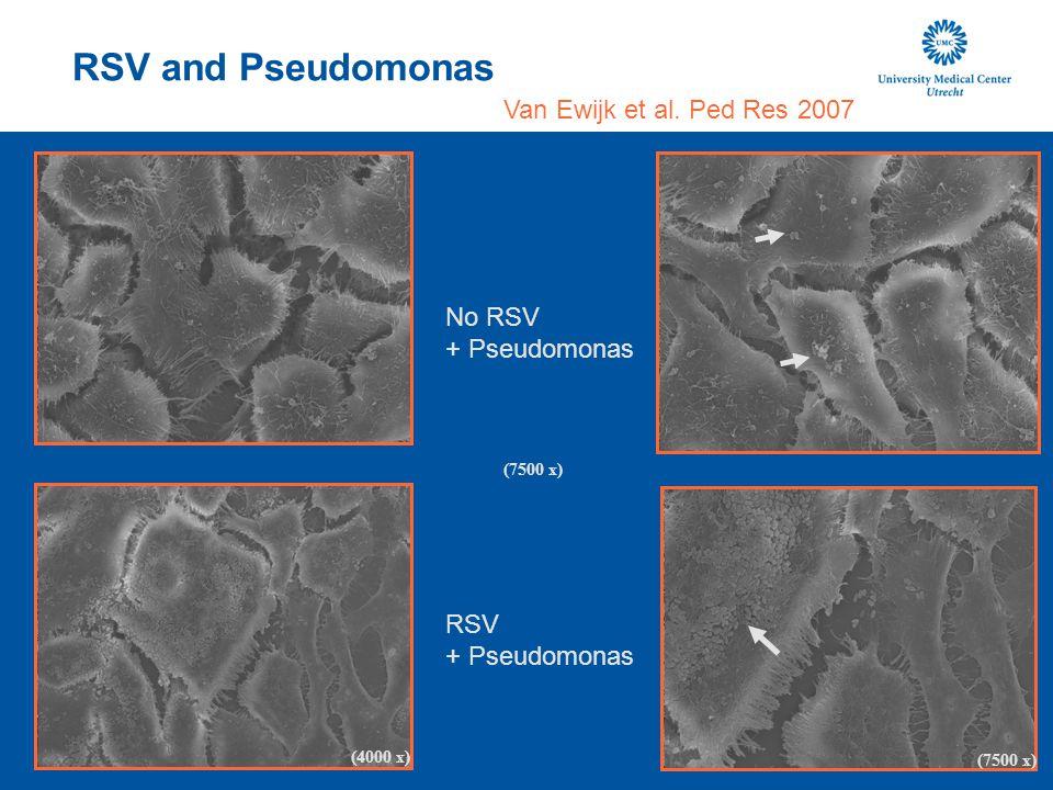 RSV and Pseudomonas Van Ewijk et al. Ped Res 2007 (7500 x) (4000 x) No RSV + Pseudomonas RSV + Pseudomonas