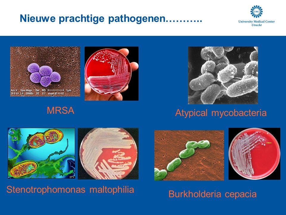 Nieuwe prachtige pathogenen……….. Stenotrophomonas maltophilia Burkholderia cepacia MRSA Atypical mycobacteria