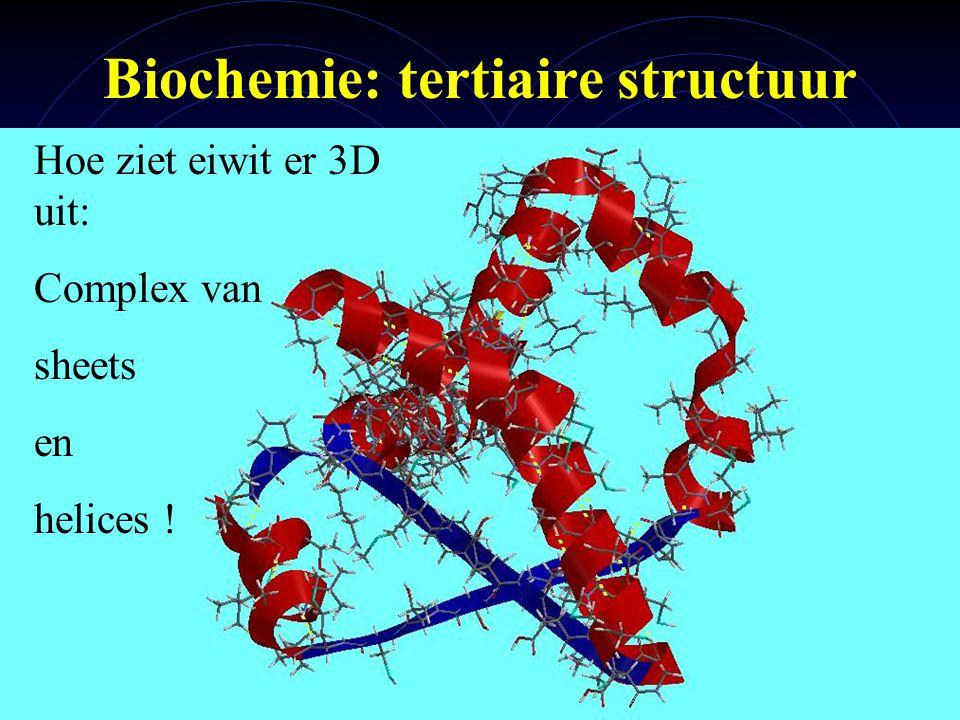 mlavd@BCEC10 Biochemie: tertiaire structuur Hoe ziet eiwit er 3D uit: Complex van sheets en helices !