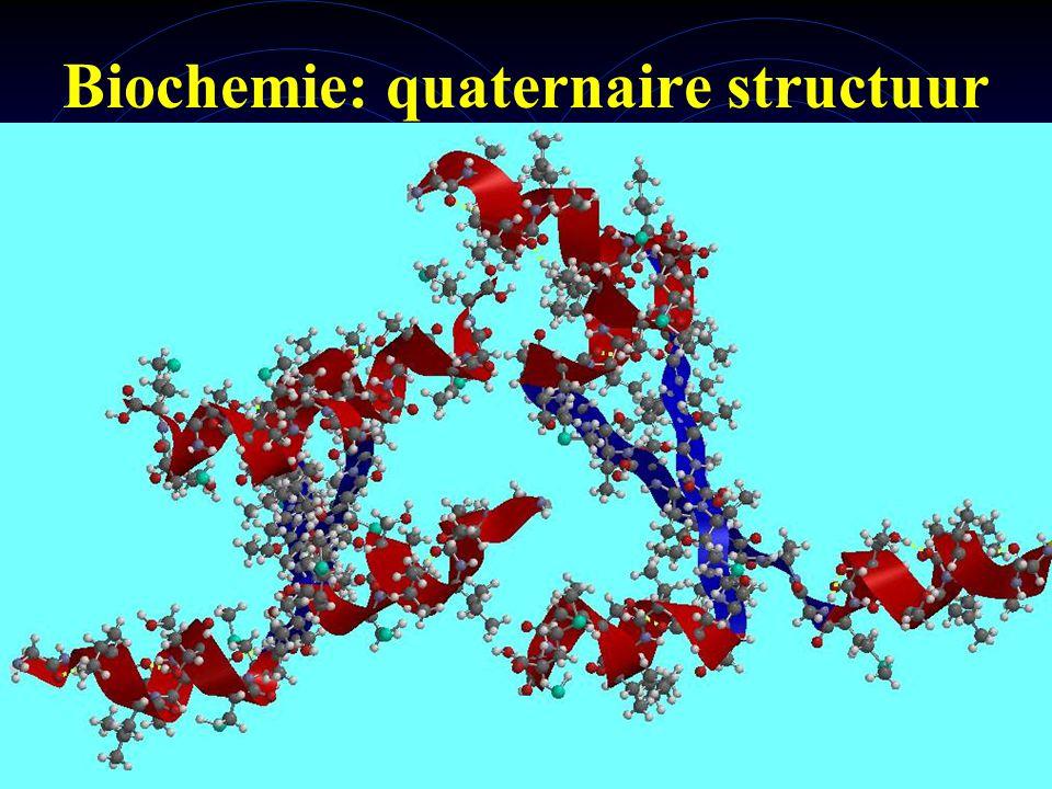 mlavd@BCEC11 Biochemie: quaternaire structuur Quaternaire structuur: hoe ziet complex van (meerdere) eiwitten er 3D uit