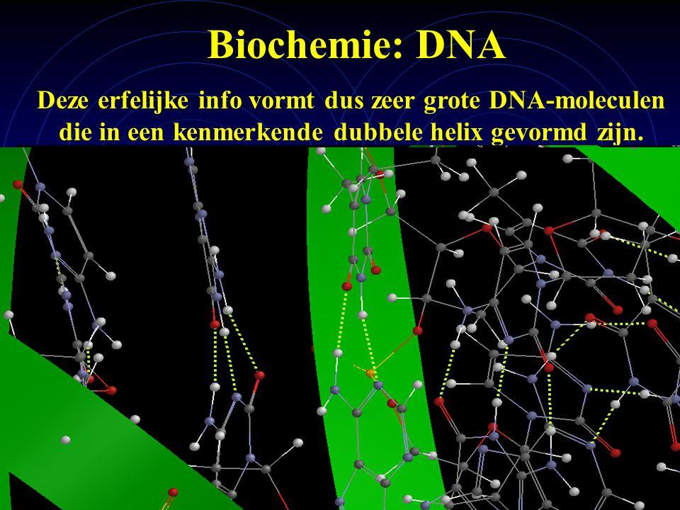 mlavd@BCEC24 Biochemie: DNA Deze erfelijke info vormt dus zeer grote DNA-moleculen die in een kenmerkende dubbele helix gevormd zijn.