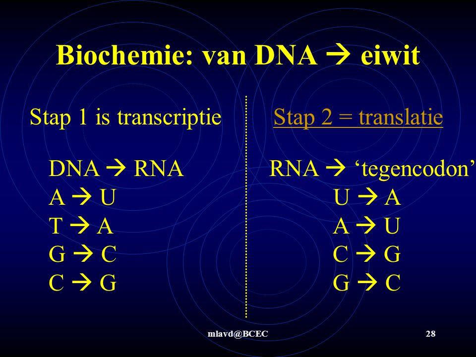 mlavd@BCEC28 Biochemie: van DNA  eiwit Stap 1 is transcriptie Stap 2 = translatieStap 2 = translatie RNA  'tegencodon' U  A A  U C  G G  C DNA 