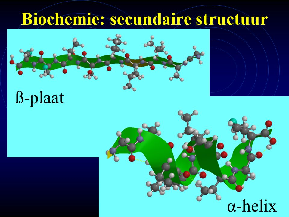 mlavd@BCEC9 Biochemie: secundaire structuur α-helix ß-plaat