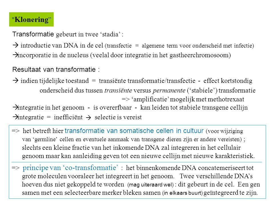 Transformatie gebeurt in twee 'stadia' :  introductie van DNA in de cel (transfectie = algemene term voor onderscheid met infectie)  incorporatie in de nucleus (veelal door integratie in het gastheerchromosoom) Resultaat van transformatie :  indien tijdelijke toestand = transiënte transformatie/transfectie - effect kortstondig onderscheid dus tussen transiënte versus permanente ('stabiele') transformatie => 'amplificatie' mogelijk met methotrexaat  integratie in het genoom - is overerfbaar - kan leiden tot stabiele transgene cellijn  integratie = inefficiënt  selectie is vereist Klonering => het betreft hier transformatie van somatische cellen in cultuur (voor wijziging van 'germline' cellen en eventuele aanmaak van transgene dieren zijn er andere vereisten) ; slechts een kleine fractie van het inkomende DNA zal integreren in het cellulair genoom maar kan aanleiding geven tot een nieuwe cellijn met nieuwe karakteristiek.