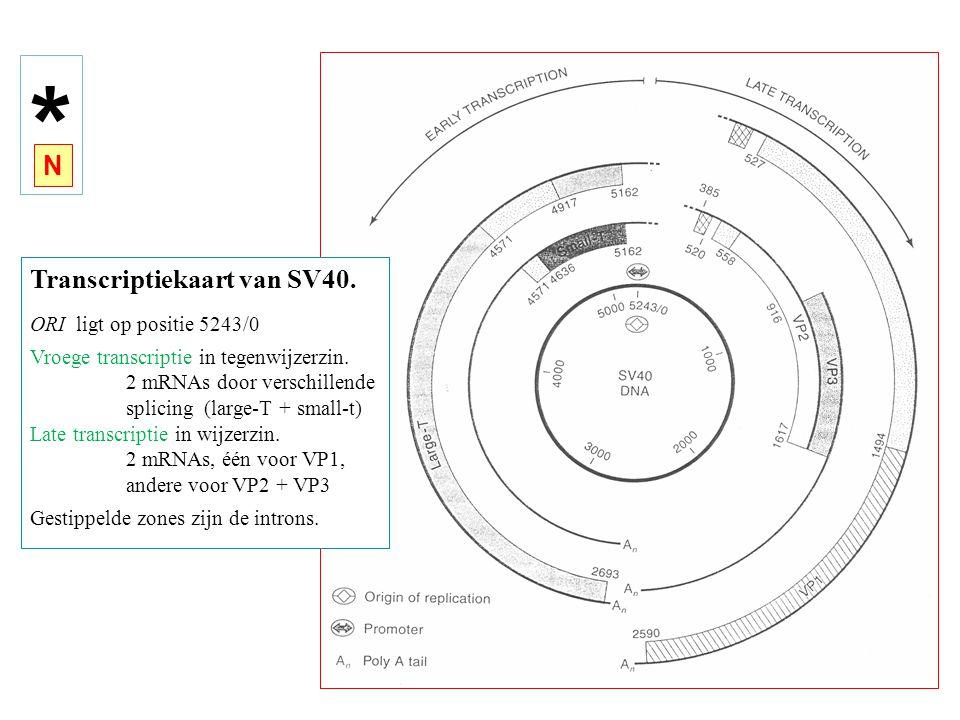Transcriptiekaart van SV40.ORI ligt op positie 5243/0 Vroege transcriptie in tegenwijzerzin.