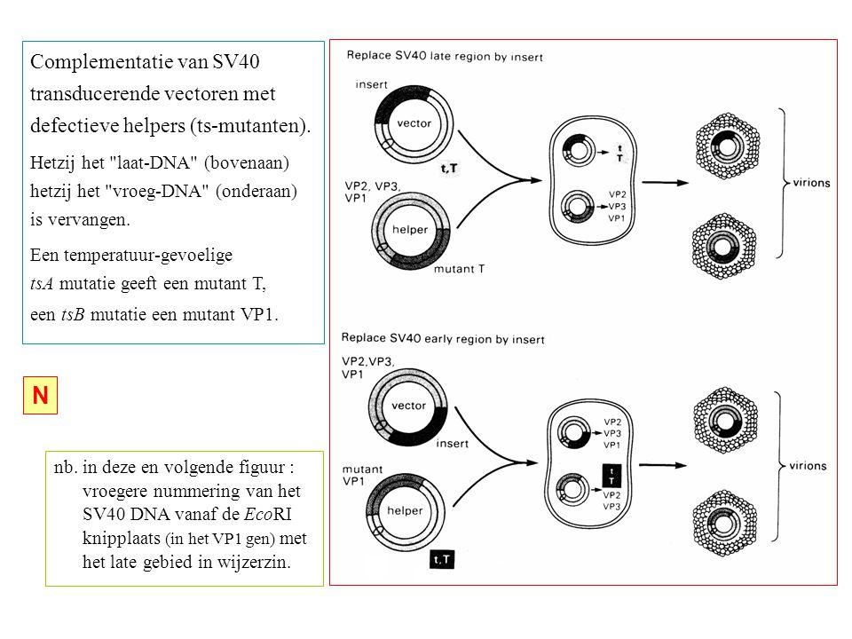 nb. in deze en volgende figuur : vroegere nummering van het SV40 DNA vanaf de EcoRI knipplaats (in het VP1 gen) met het late gebied in wijzerzin. Comp