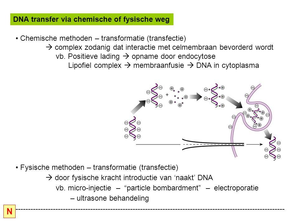 Belangrijkste karakteristieken Basisgegevens : replicatie : ORI : minimaal 70 bp bi-directionele replicatie bij elke replicatieronde is opnieuw T-antigen nodig ORI : sluit promotoractiviteit in op beide strengen (tegengestelde richtingen) - vroege mRNA's : 19S (T en t) -late mRNA's : 16S (VP1) en 19S (VP2 en VP3) Beperkte inpakmogelijkheid : tot 110% van het genoom (30% deleties mogelijk) => dit limiteert vectorconstructie Bij pendelvectoren ( zie verder) moet rekening gehouden worden met zogenaamde toxische sequenties van pBR322 : dit zijn sequenties die de efficientie van transformatie van dierlijke cellen verminderen.
