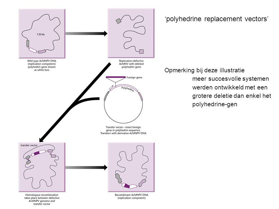 'polyhedrine replacement vectors' Opmerking bij deze illustratie meer succesvolle systemen werden ontwikkeld met een grotere deletie dan enkel het polyhedrine-gen