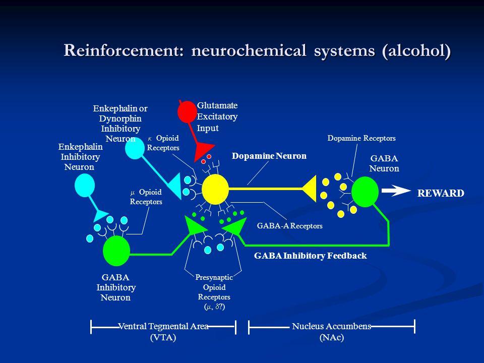 Reinforcement: neurochemical systems (alcohol) Enkephalin Inhibitory Neuron REWARD Glutamate Excitatory Input Enkephalin or Dynorphin Inhibitory Neuro