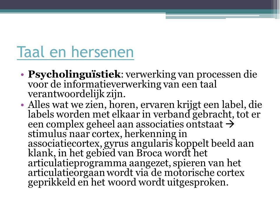 Taal en hersenen Psycholinguïstiek: verwerking van processen die voor de informatieverwerking van een taal verantwoordelijk zijn.