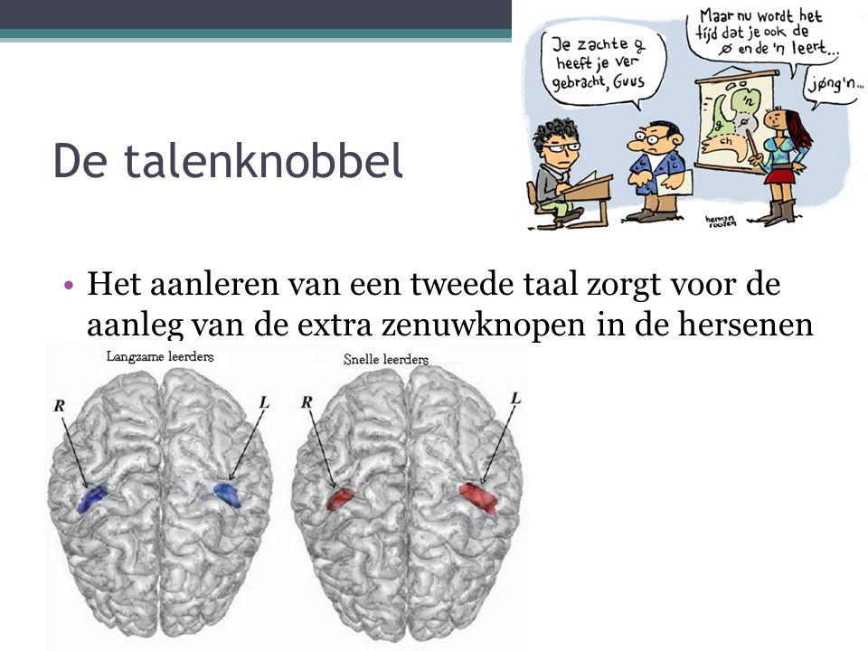 De talenknobbel Het aanleren van een tweede taal zorgt voor de aanleg van de extra zenuwknopen in de hersenen