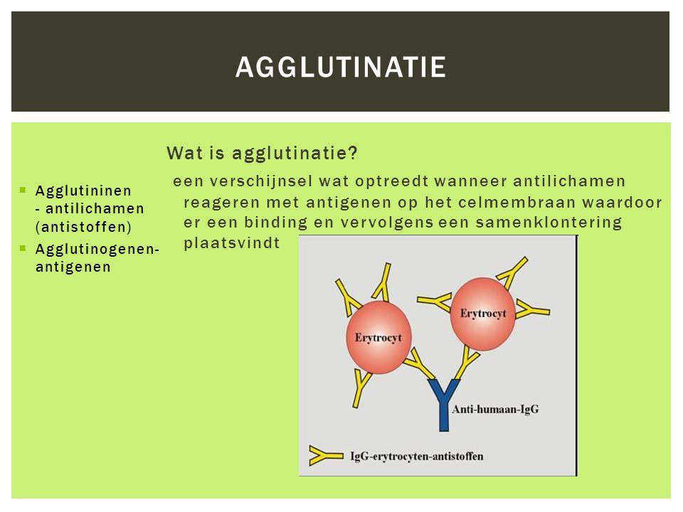 AGGLUTINATIE Wat is agglutinatie? een verschijnsel wat optreedt wanneer antilichamen reageren met antigenen op het celmembraan waardoor er een binding