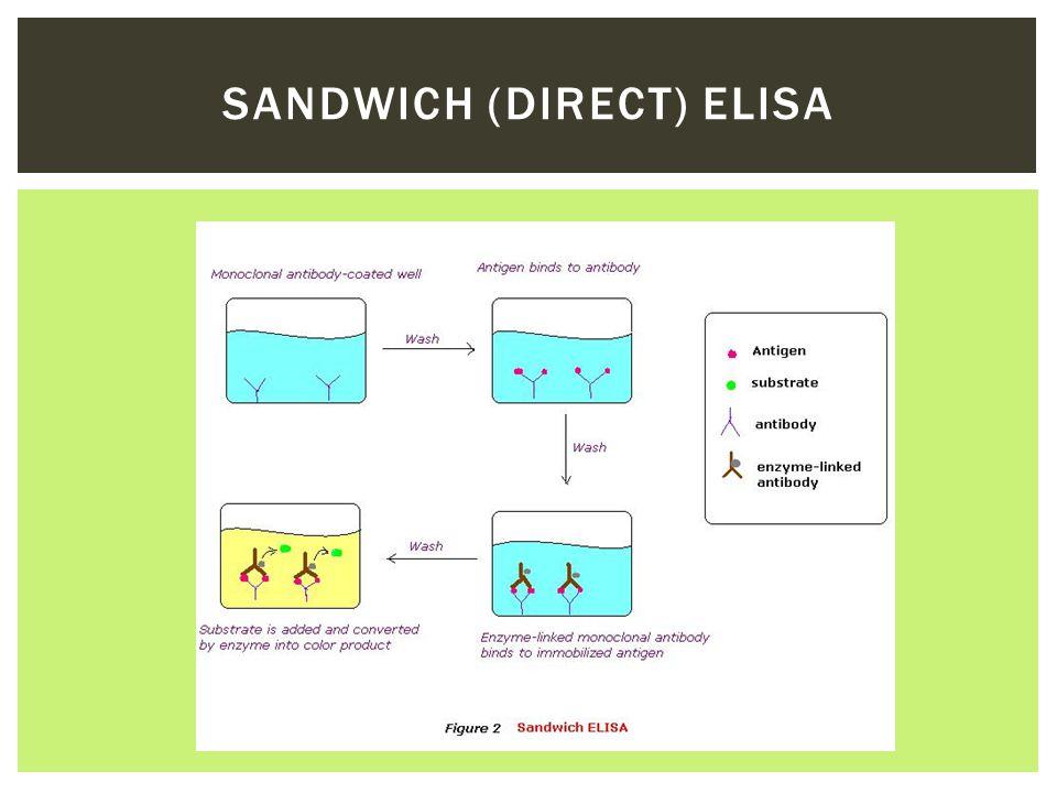 SANDWICH (DIRECT) ELISA