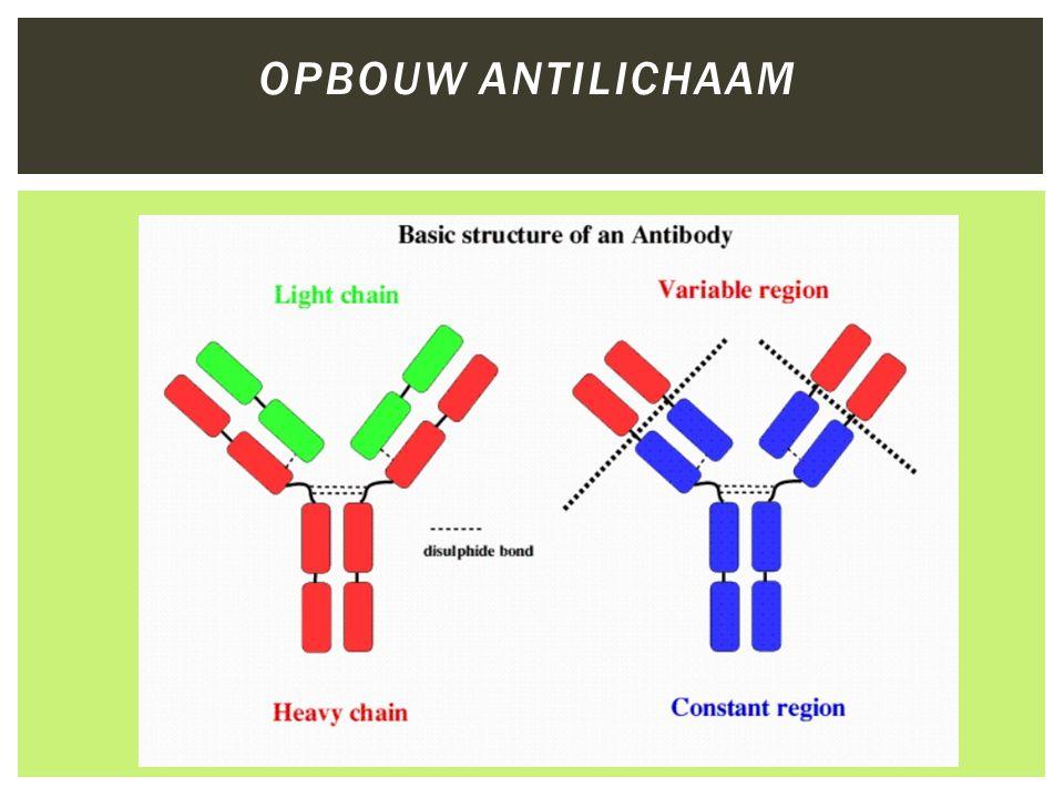 ELISA TEST  Enzym Linked Immuno Sorbent Assay  Immunochemische test  Binding tussen antigenen en antilichamen  Primaire en secundaire antilichamen  Rol Enzym zorgt voor kleurreactie -> detectie  Opbouw van de test kan variëren –twee typen