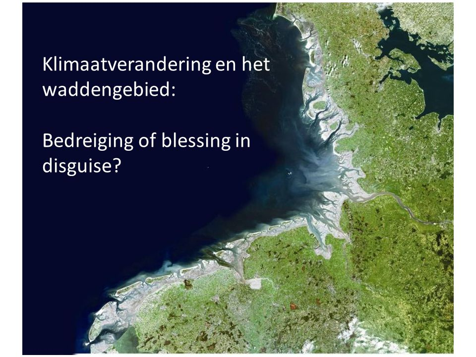 Zeespiegelstijging en de Waddenzee De Waddenzee kan een zekere zeespiegelstijging bijhouden als: De snelheid van zeespiegelstijging niet groter wordt dan 6 mm jaar; Voldoende sediment in de Waddenzee kan worden vastgehouden Biobouwers de kans krijgen Het kwelderareaal minimaal behouden blijft