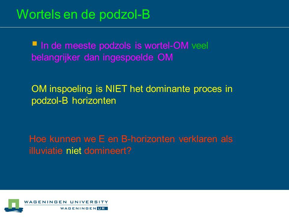 Wortels en de podzol-B  In de meeste podzols is wortel-OM veel belangrijker dan ingespoelde OM OM inspoeling is NIET het dominante proces in podzol-B