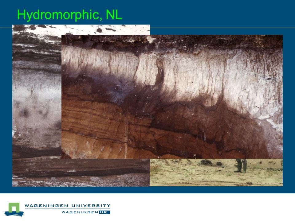 Hydromorphic, NL
