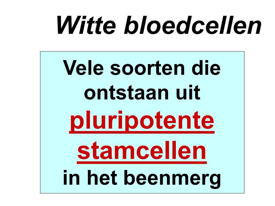 Witte bloedcellen Vele soorten die ontstaan uit pluripotente stamcellen in het beenmerg