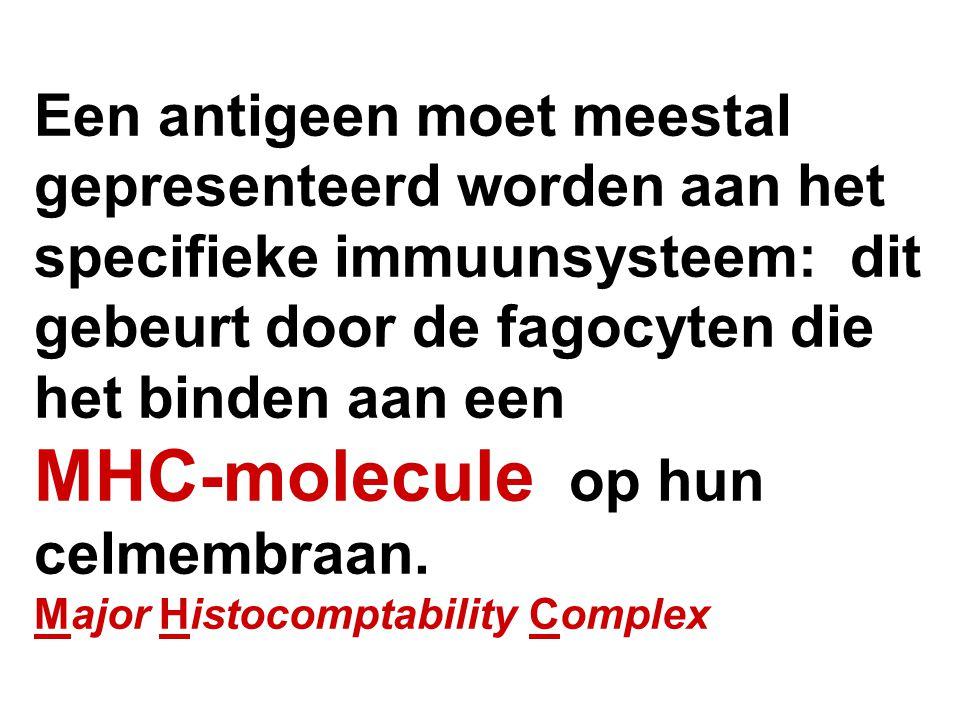 Een antigeen moet meestal gepresenteerd worden aan het specifieke immuunsysteem: dit gebeurt door de fagocyten die het binden aan een MHC-molecule op