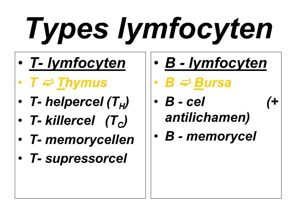 Types lymfocyten T- lymfocyten T  Thymus T- helpercel (T H ) T- killercel (T C ) T- memorycellen T- supressorcel B - lymfocyten B  Bursa B - cel (+