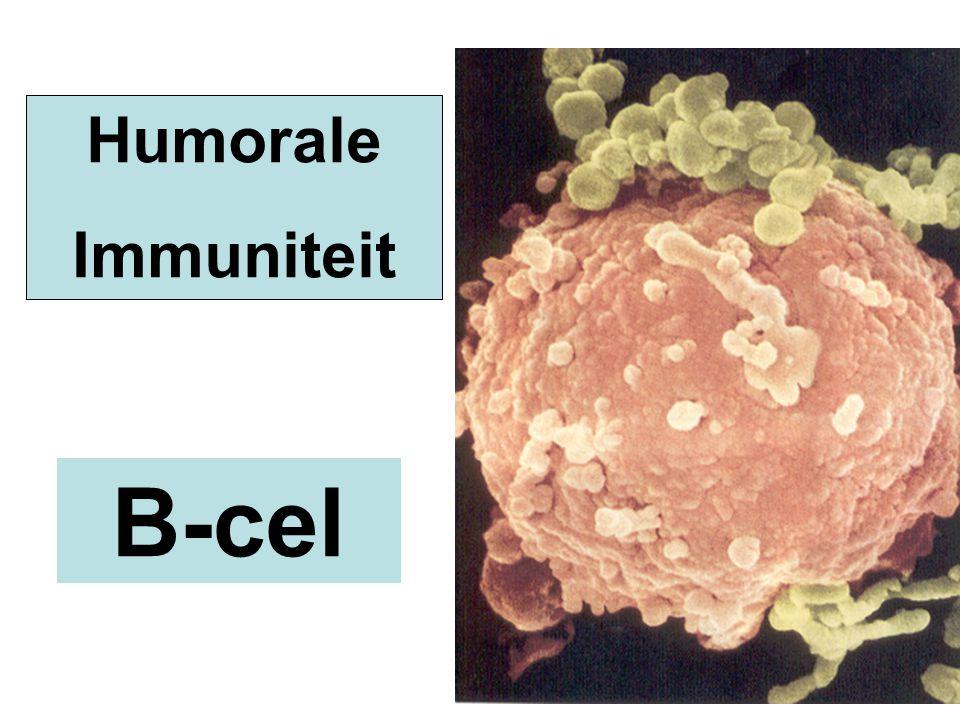 B-cel Humorale Immuniteit