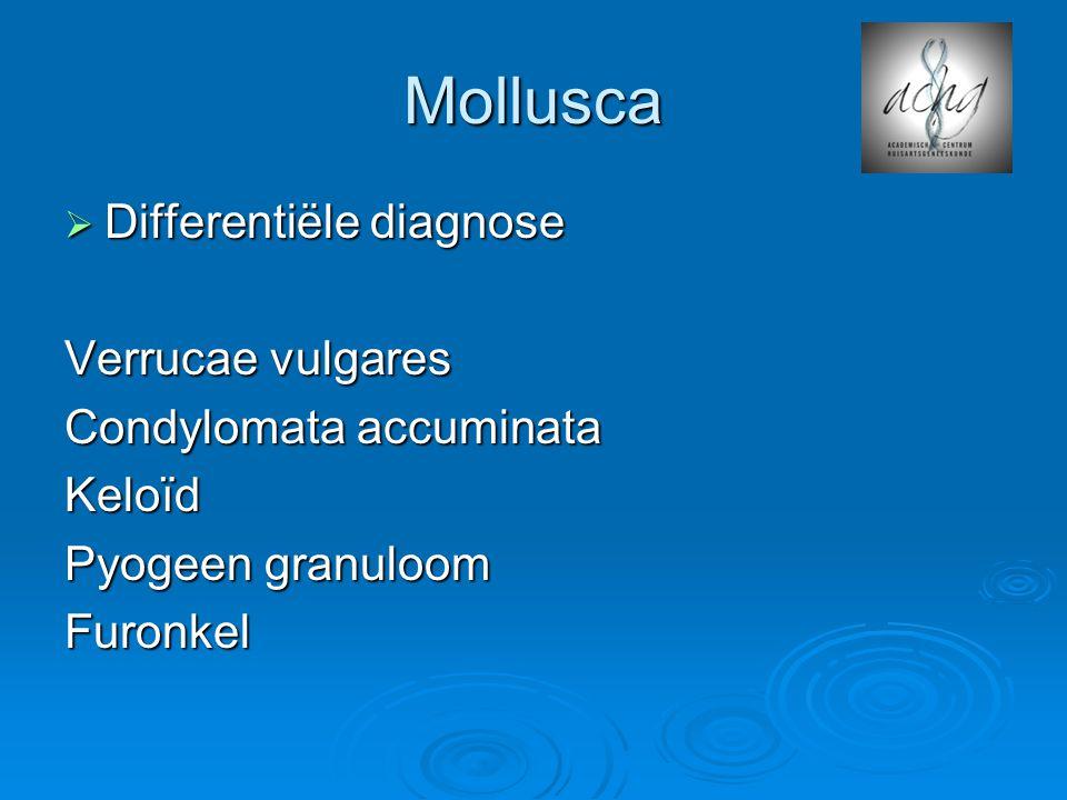Mollusca  Differentiële diagnose Verrucae vulgares Condylomata accuminata Keloïd Pyogeen granuloom Furonkel