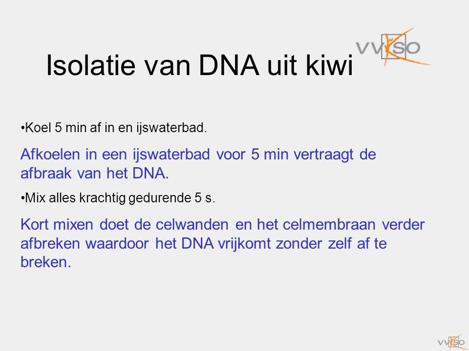Isolatie van DNA uit kiwi Koel 5 min af in en ijswaterbad. Afkoelen in een ijswaterbad voor 5 min vertraagt de afbraak van het DNA. Mix alles krachtig