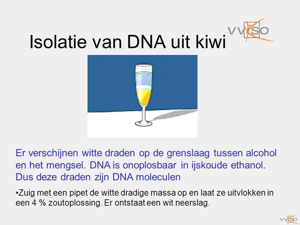 Isolatie van DNA uit kiwi Er verschijnen witte draden op de grenslaag tussen alcohol en het mengsel. DNA is onoplosbaar in ijskoude ethanol. Dus deze