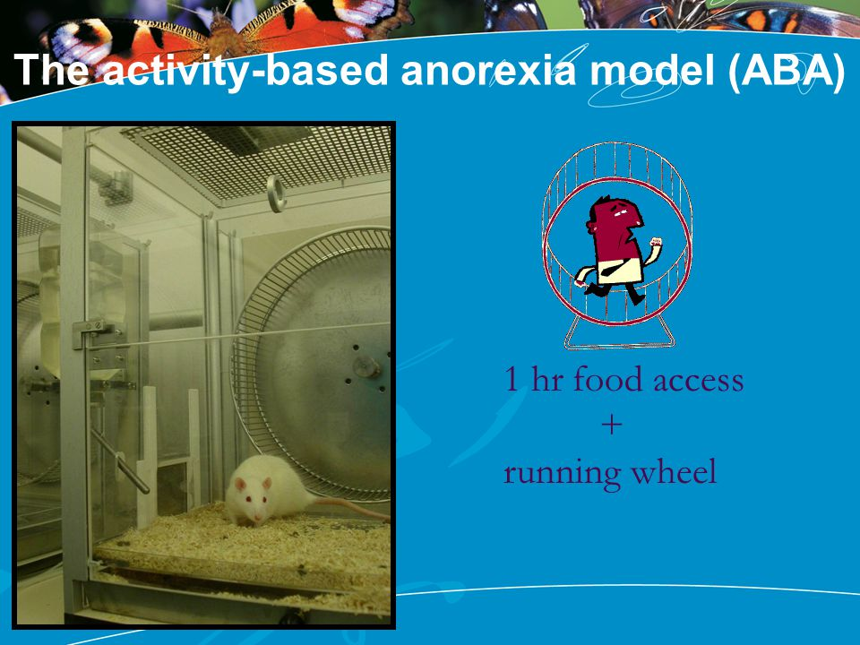 The activity-based anorexia model (ABA) 1 hr food access + running wheel