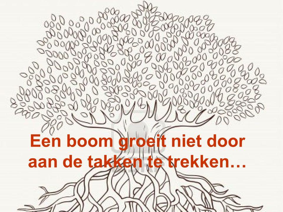 Een boom groeit niet door aan de takken te trekken…
