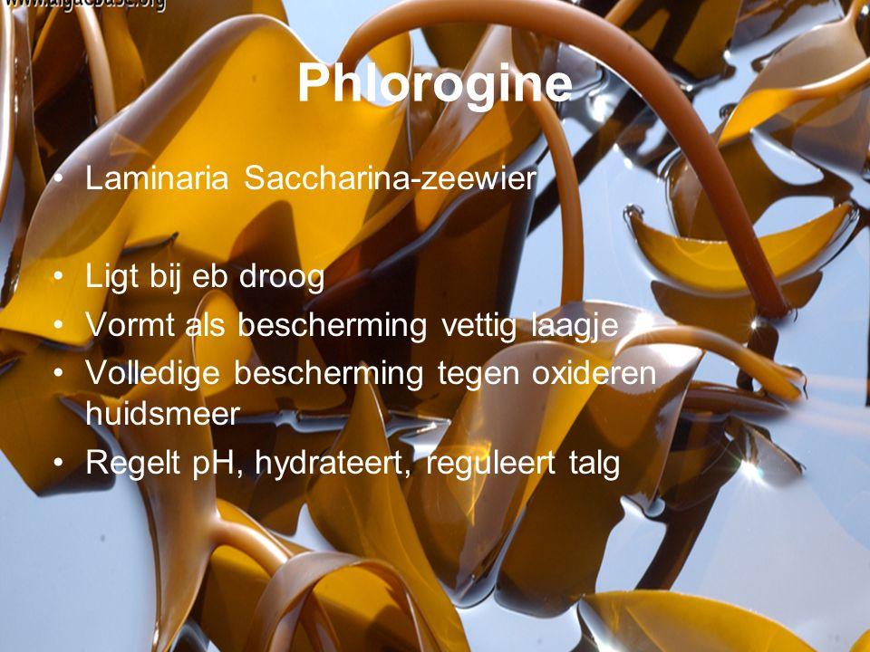 Phlorogine Laminaria Saccharina-zeewier Ligt bij eb droog Vormt als bescherming vettig laagje Volledige bescherming tegen oxideren huidsmeer Regelt pH, hydrateert, reguleert talg