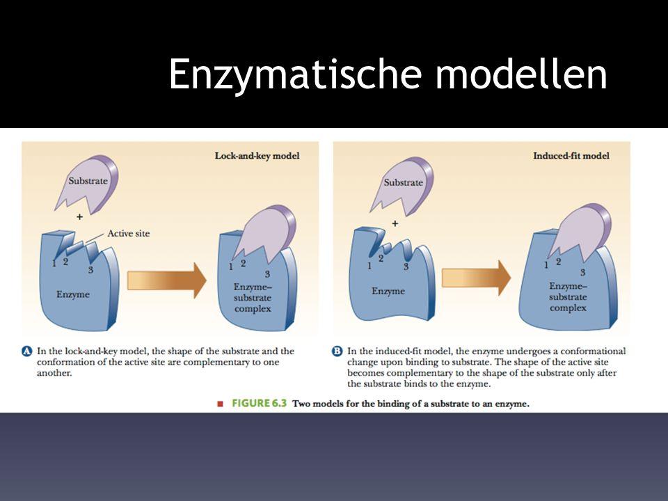 Enzymatische modellen