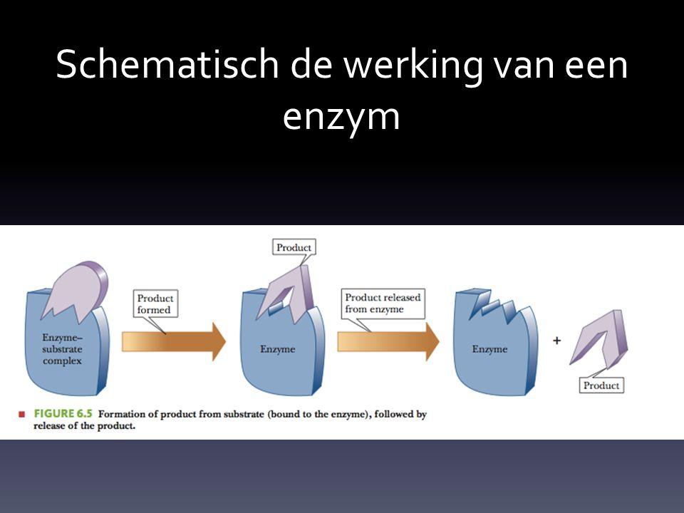 Schematisch de werking van een enzym