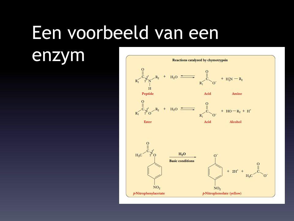 Een voorbeeld van een enzym