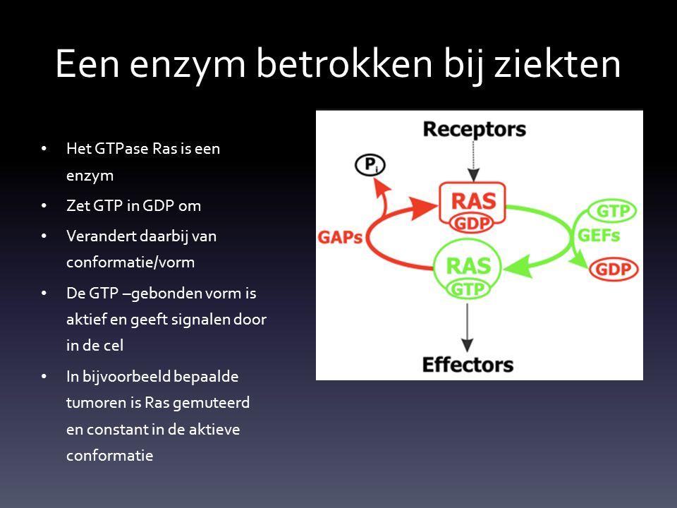 Een enzym betrokken bij ziekten Het GTPase Ras is een enzym Zet GTP in GDP om Verandert daarbij van conformatie/vorm De GTP –gebonden vorm is aktief e