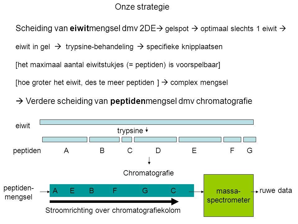 Onze strategie Scheiding van eiwitmengsel dmv 2DE  gelspot  optimaal slechts 1 eiwit  eiwit in gel  trypsine-behandeling  specifieke knipplaatsen [het maximaal aantal eiwitstukjes (= peptiden) is voorspelbaar] [hoe groter het eiwit, des te meer peptiden ]  complex mengsel  Verdere scheiding van peptidenmengsel dmv chromatografie trypsine peptiden A B C D E F G eiwit Chromatografie A E B F G C massa- spectrometer peptiden- mengsel Stroomrichting over chromatografiekolom ruwe data
