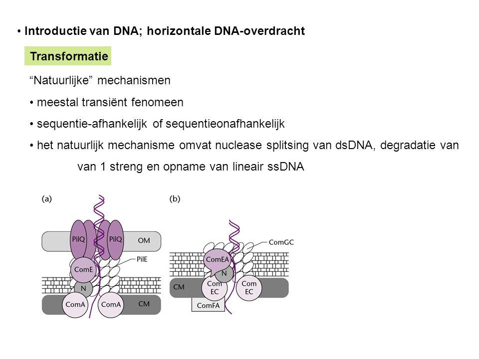 """Introductie van DNA; horizontale DNA-overdracht Transformatie """"Natuurlijke"""" mechanismen meestal transiënt fenomeen sequentie-afhankelijk of sequentieo"""