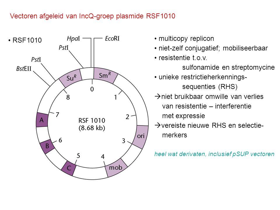 Vectoren afgeleid van IncQ-groep plasmide RSF1010 RSF1010 multicopy replicon niet-zelf conjugatief; mobiliseerbaar resistentie t.o.v. sulfonamide en s
