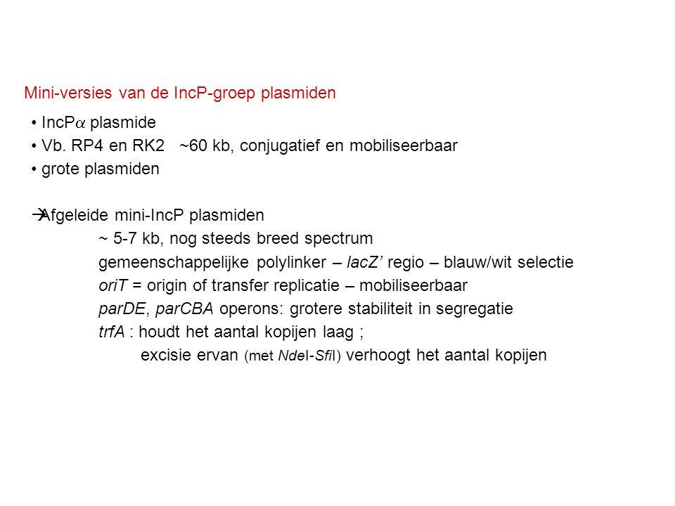 Mini-versies van de IncP-groep plasmiden IncP  plasmide Vb. RP4 en RK2 ~60 kb, conjugatief en mobiliseerbaar grote plasmiden  Afgeleide mini-IncP pl