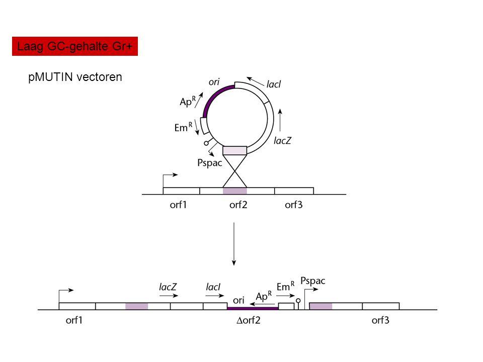 Laag GC-gehalte Gr+ pMUTIN vectoren