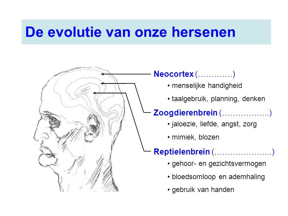 Neocortex (………….) Zoogdierenbrein (………….…..) Reptielenbrein (………..………..) gehoor- en gezichtsvermogen bloedsomloop en ademhaling gebruik van handen jal