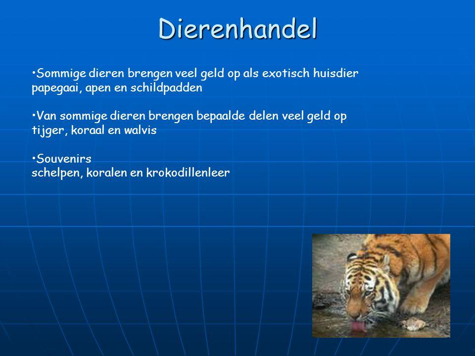 Bedreigde dieren Project dieren