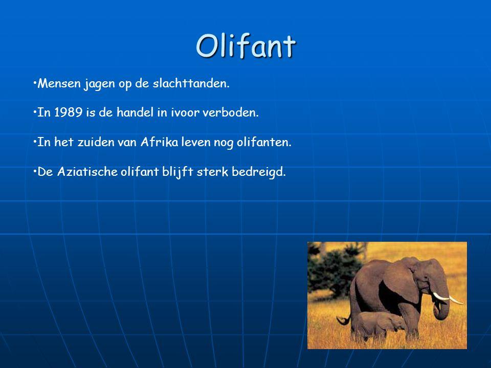 Neushoorn Mensen jagen op de neushoorn mensen denken dat de hoorn een geneeskrachtige werking heeft. De neushoorns worden beschermd in neushoornreserv