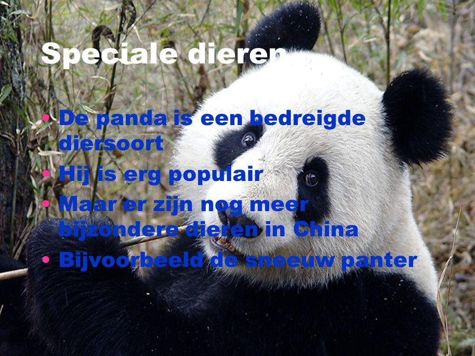 Speciale dieren De panda is een bedreigde diersoort Hij is erg populair Maar er zijn nog meer bijzondere dieren in China Bijvoorbeeld de sneeuw panter