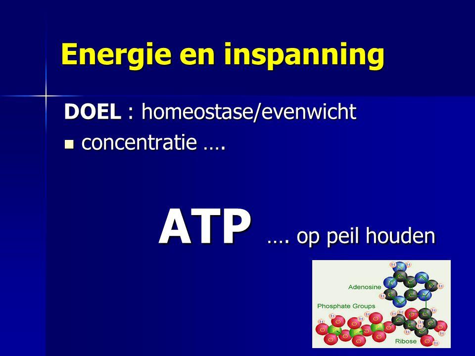 Energie en inspanning DOEL : homeostase/evenwicht concentratie …. concentratie …. ATP …. op peil houden 12