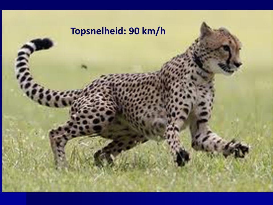 Topsnelheid: 90 km/h