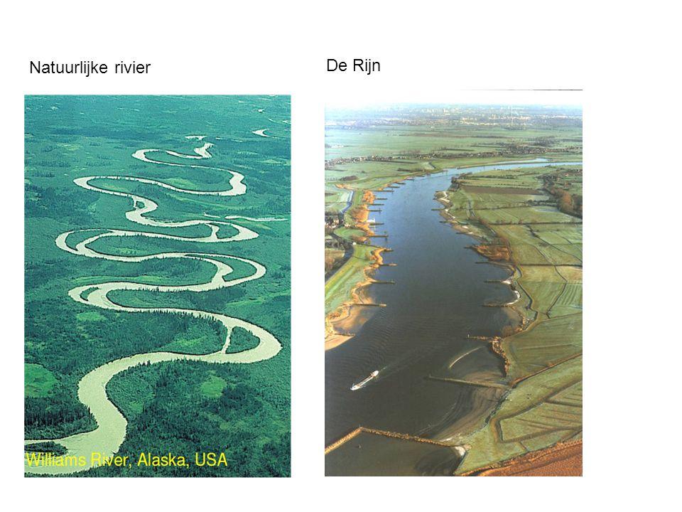 Natuurlijke rivier De Rijn